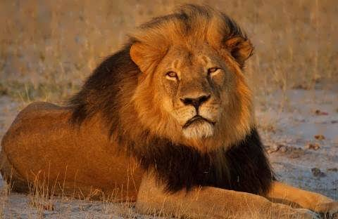 Cecil Killing Offers Prospect of Sweeping Reforms