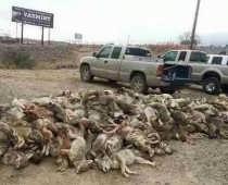 Nevada Wildlife Killing Contests