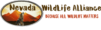 Nevada WildLife Alliance