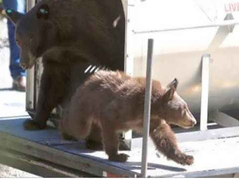 Lake Tahoe residents, NDOW differ on bear management after latest incident